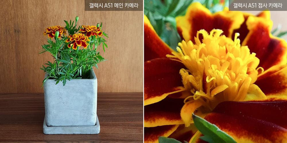 ▲ 짙은 그라데이션 잎을 펼치며 만개한 '메리골드'. 가운데 피어난 수술이 '꽃 속의 꽃'을 보는 듯 신비롭다.