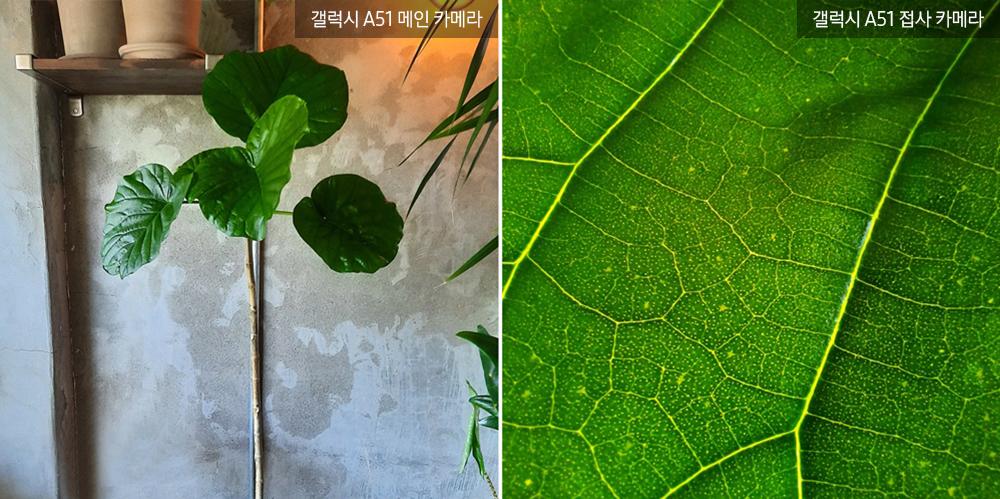 ▲ 넓게 펼쳐진 잎이 매력적인 '휘카스 움베르타'. 굵고 얇은 잎맥들이 거미줄처럼 어우러져 신비로운 무늬를 만들어내고 있다.