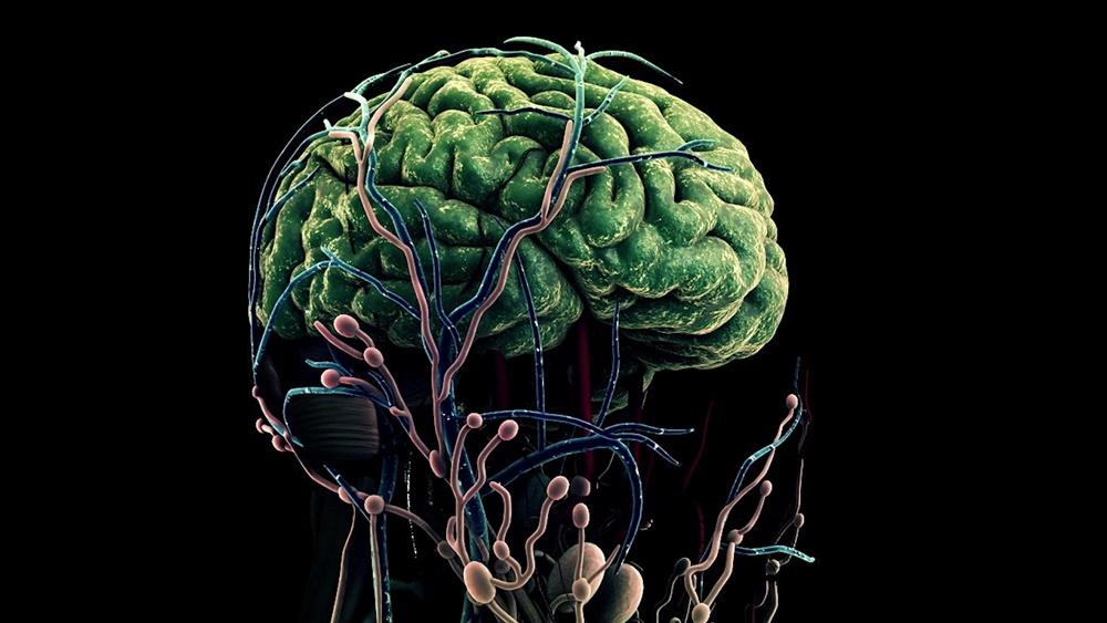 뇌의 대사활동으로 생성된 노폐물의 배출 경로를 연구하는 KAIST 박성홍 교수 연구 관련 그래픽