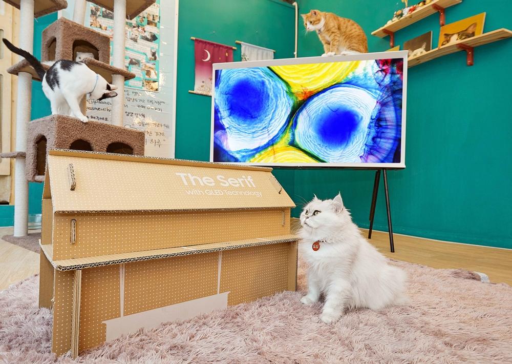고양이 마음에도 쏙 드는 더 세리프와 에코 패키지