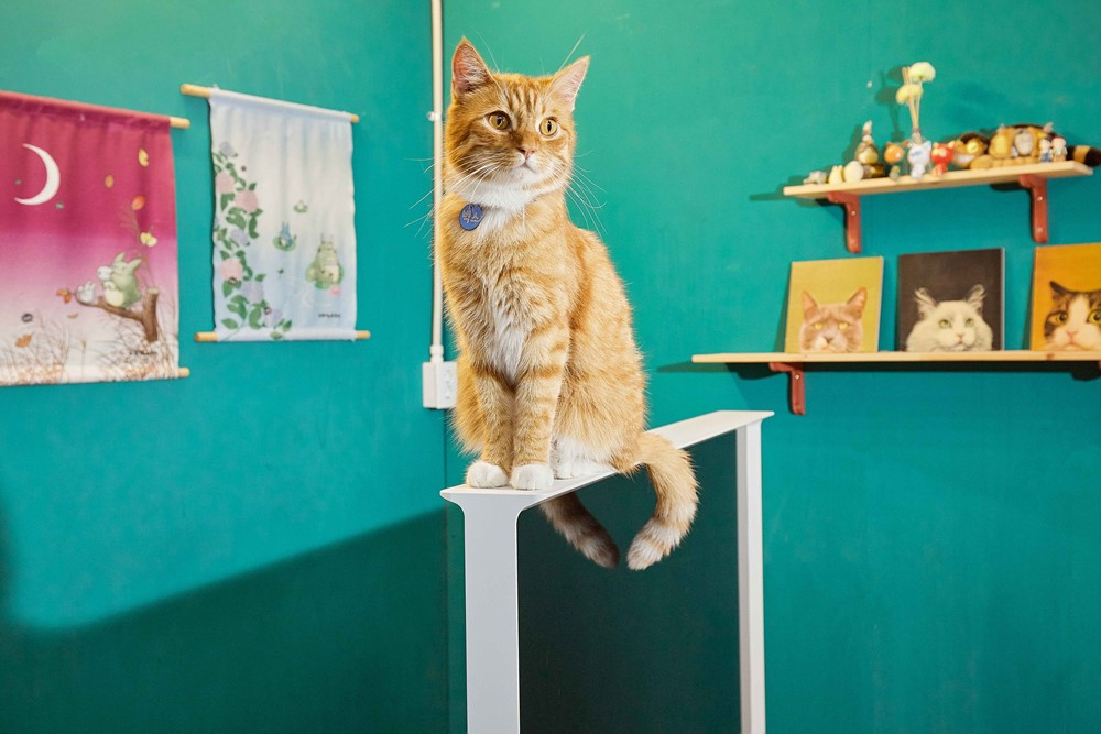 더 세리프 위에 앉아있는 고양이
